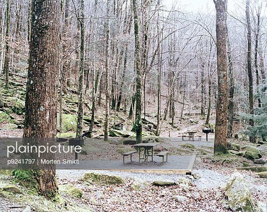 Picnic tables in forest