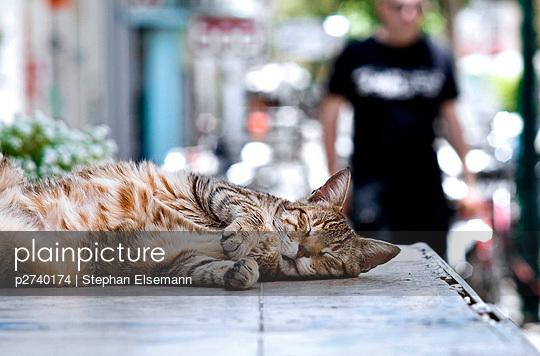 Cat sleeping in the shadow