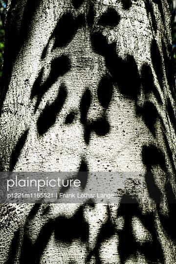 Schattenspiel auf einem Baumstamm - p1221m1165521 von Frank Lothar Lange