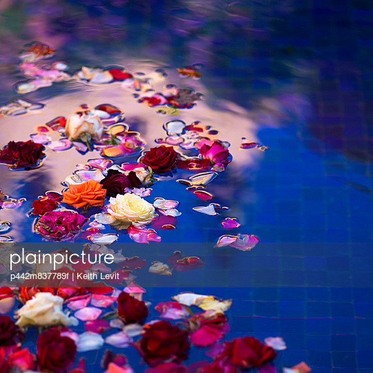 Floating roses and petals in a pool with blue tile