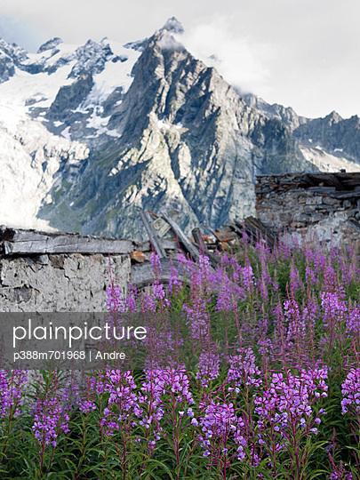 Purple flowers in alpine landscape