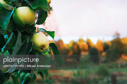 p847m1151950 von Mikael Andersson