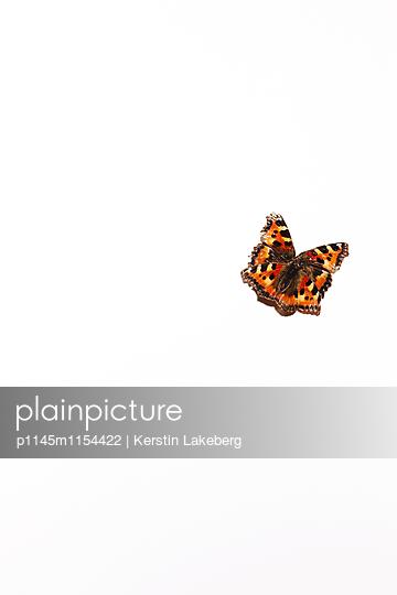 Schmetterling - p1145m1154422 von Kerstin Lakeberg