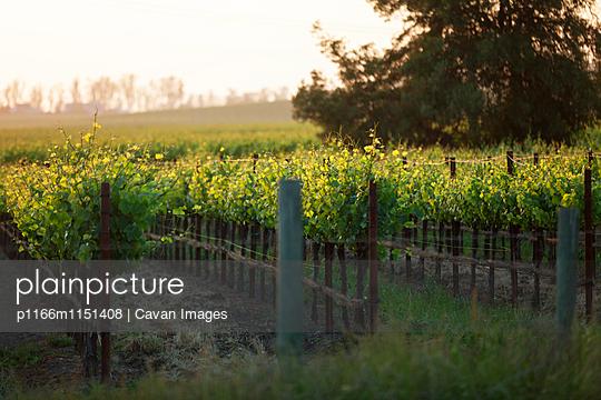 p1166m1151408 von Cavan Images