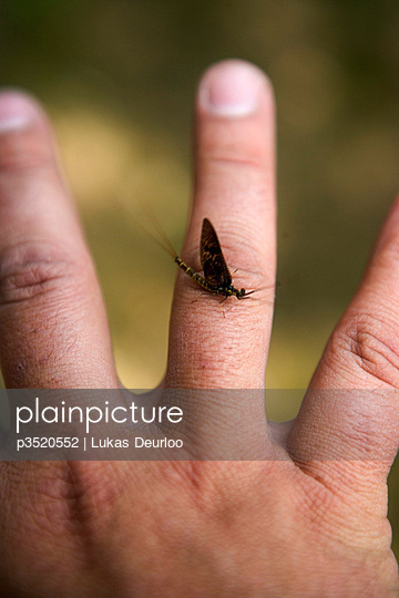 Insect on a hand