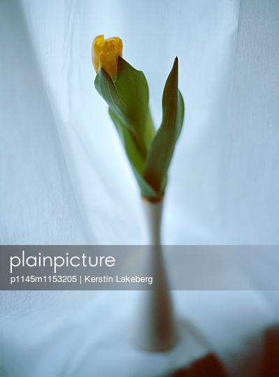 Tulpe - p1145m1153205 von Kerstin Lakeberg