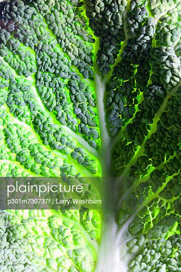 Leaf of Savoy cabbage, full frame