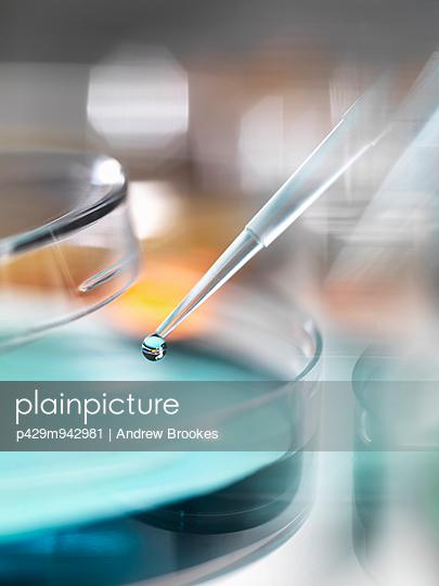 Scientist pipetting sample into a petri dish in a laboratory