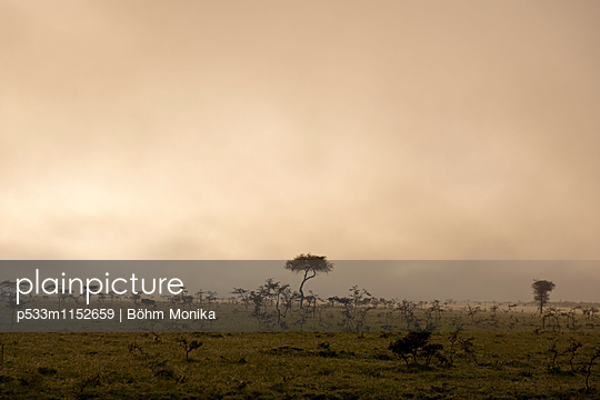 Morgennebel in der Masai Mara - p533m1152659 von Böhm Monika