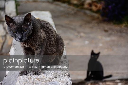 2 Street Cats