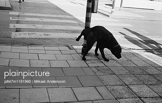 p847m1151960 von Mikael Andersson
