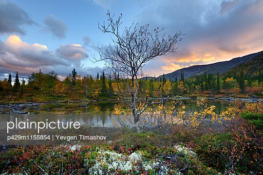 p429m1155854 von Yevgen Timashov
