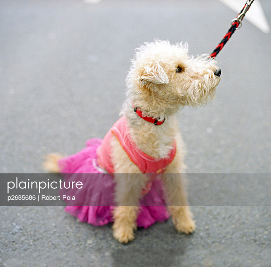 Dog with pink clothes