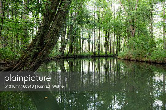 Fließ im Spreewald, UNESCO Biosphärenreservat, Lübbenau, Brandenburg, Deutschland - p1316m1160913 von Konrad Wothe