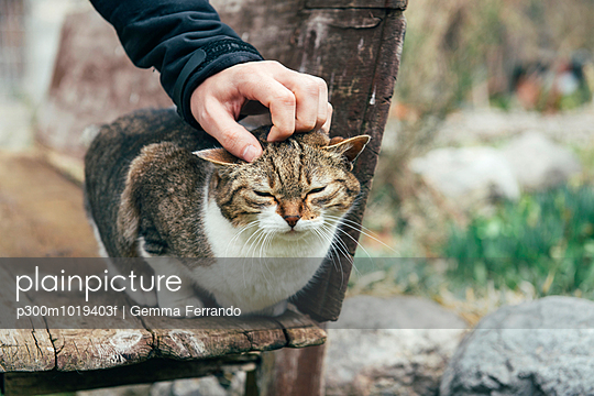 Man petting a stray cat sitting on a wooden bench
