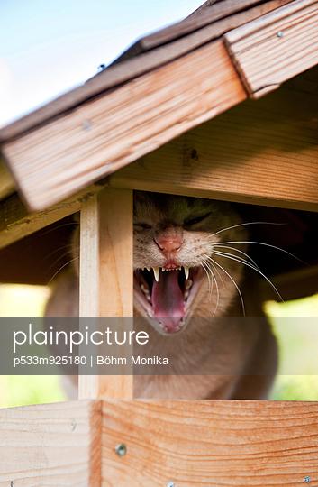 Cat in birdhouse