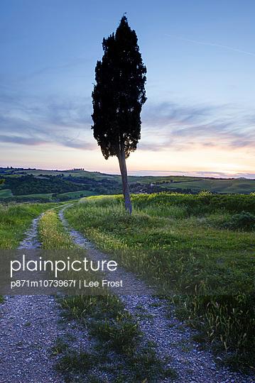 Lone cypress tree at sunset, near Pienza, Tuscany, Italy, Europe
