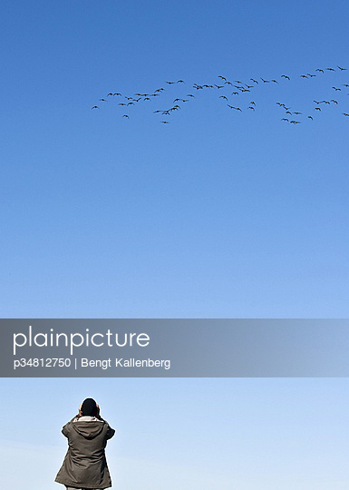 Man looking at flying birds