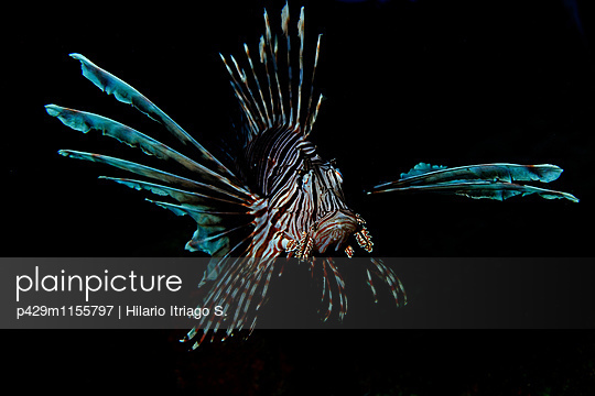 p429m1155797 von Hilario Itriago S.