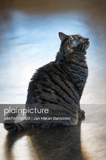 Cat Sitting On Floor