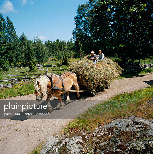 Horse with load of hay