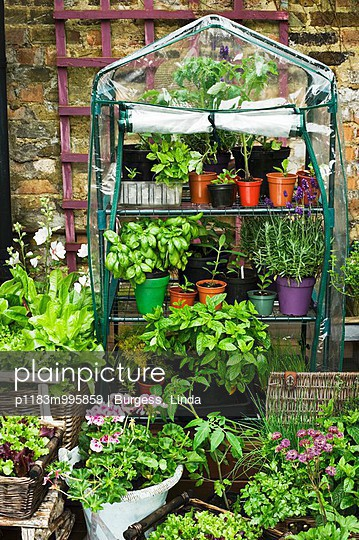 Small plastic greenhouse and various types of vegetables and lettuces in pots on terrace
