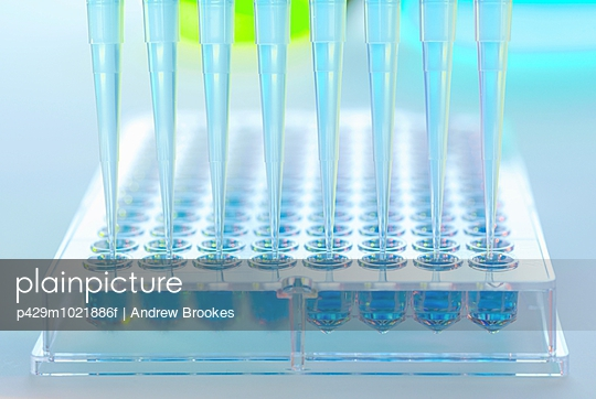 Multi pipette adding samples to multi well tray in a laboratory