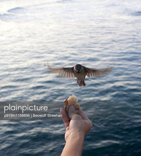 Vogel füttern - p919m1158896 von Beowulf Sheehan
