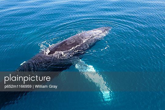 p652m1166959 von William Gray