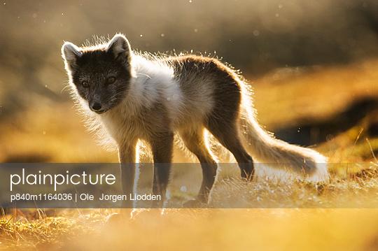 p840m1164036 von Ole  Jorgen Liodden