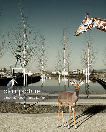 Wild animals in the city, Composite
