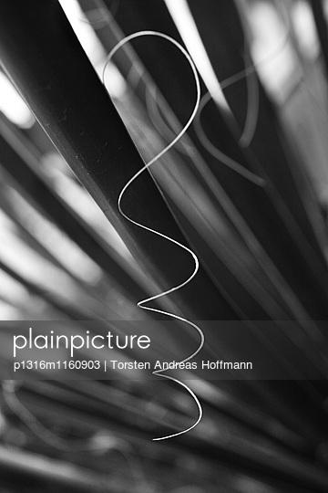 Geringelte Faser eines Palmblattes, Türkei - p1316m1160903 von Torsten Andreas Hoffmann