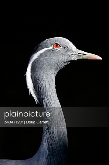 Elegant Bird With Red Eye