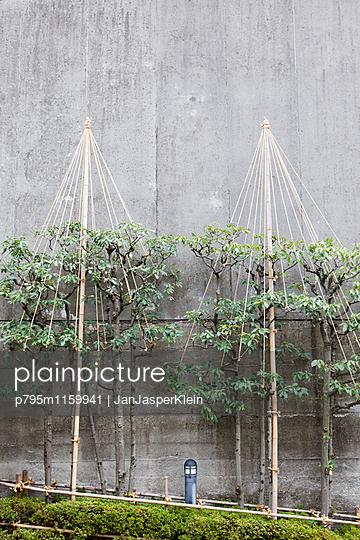 Befestigte Bäume in Japan - p795m1159941 von Janklein