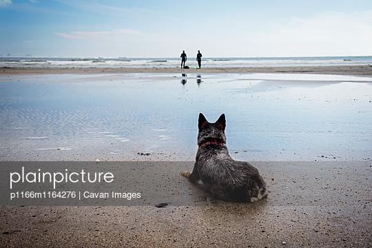 p1166m1164276 von Cavan Images