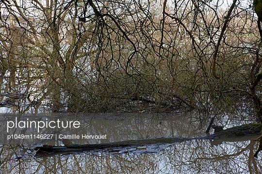 Dickicht - p1049m1146227 von Camille Hervouet