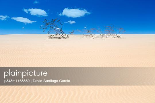p343m1168389 von David Santiago Garcia