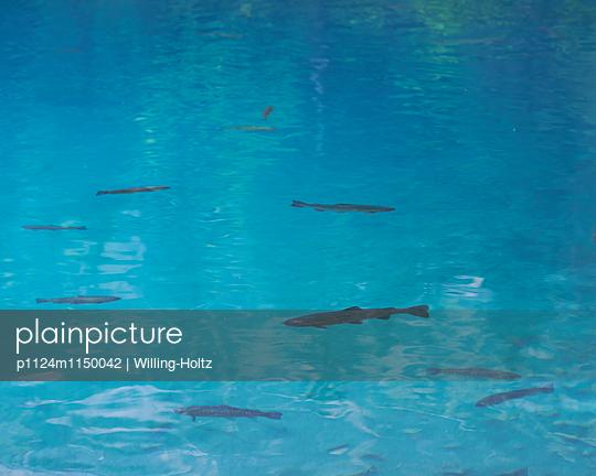 Fische im blauen Wasser - p1124m1150042 von Willing-Holtz