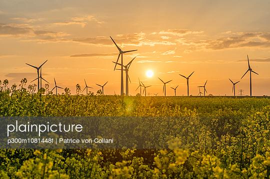 Wind farm and rape field at sunset