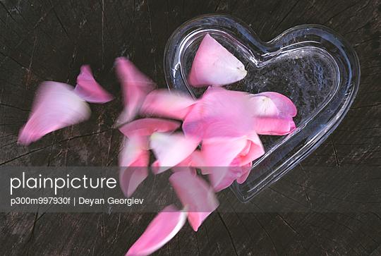 Rose leaves falling in heart shape on wood