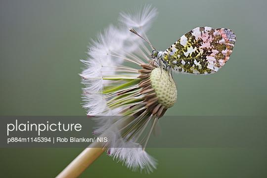 p884m1145394 von Rob Blanken/ NIS