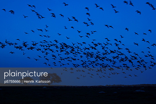 A flock of birds in the night
