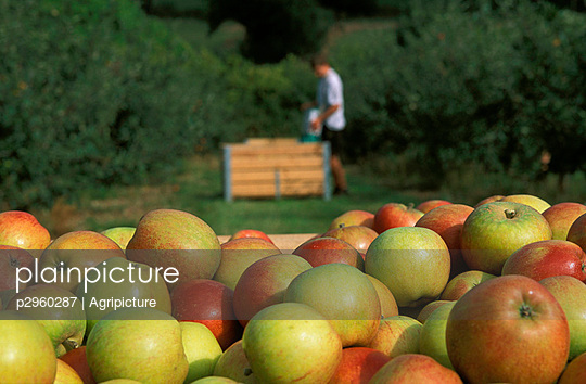 Fruit crops