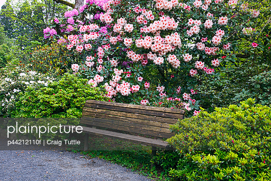 Spring Flowers And A Bench In Crystal Springs Rhododendron Gardens