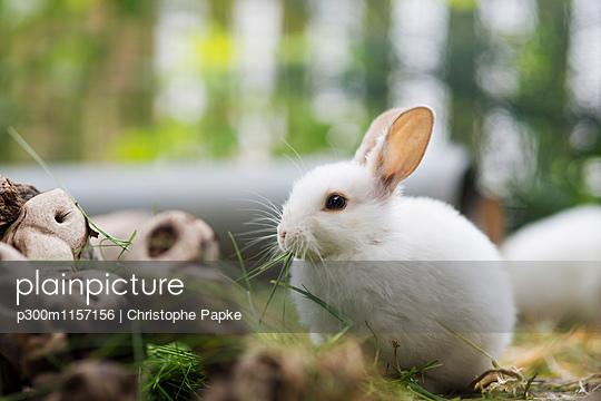 p300m1157156 von Christophe Papke