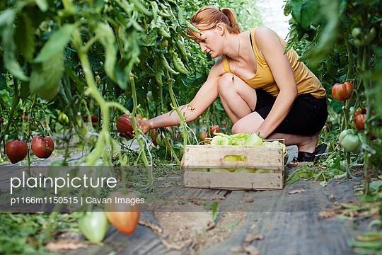 p1166m1150515 von Cavan Images