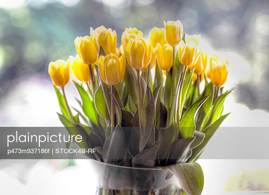Bunch of yellow tulips