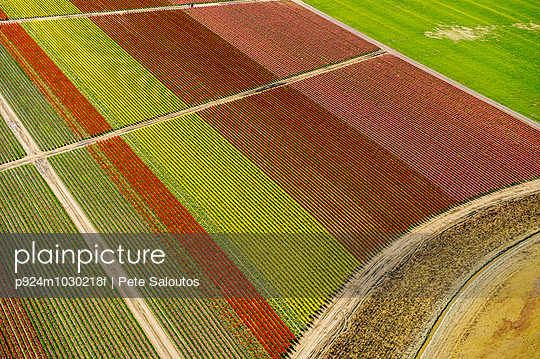 Aerial view of tulip fields and paths