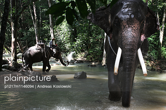 Elefanten - p1217m1146094 von Andreas Koslowski