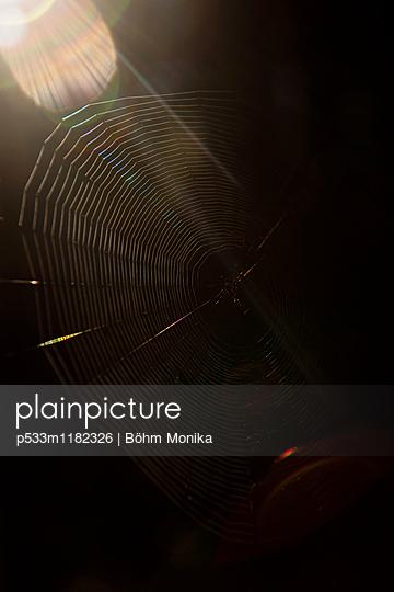 Spinnennetz mit Sonnenstrahlen - p533m1182326 von Böhm Monika